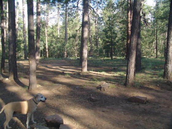 Aspen Campsite