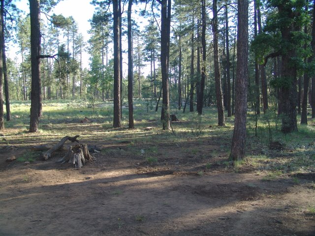 Aspen campground woods canyon lake camp arizona aspen campsite publicscrutiny Image collections