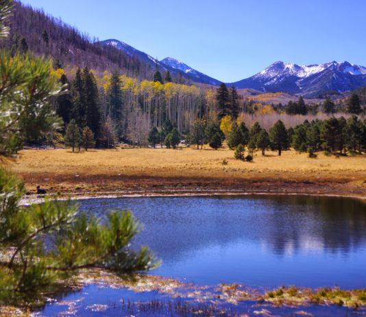 Lockett Meadow