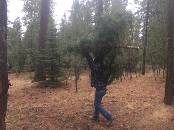 Xmas Tree Harvest