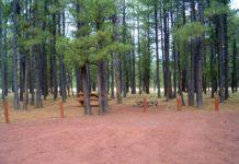 Benny Creek Campground