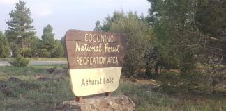 Ashurst Lake Campground