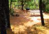 CampAZ | Haigler Canyon Campground