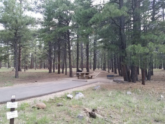 Pine Grove Campground | Camp Arizona